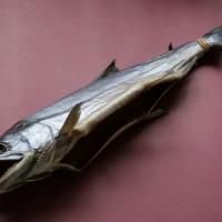 塩引き鮭一尾
