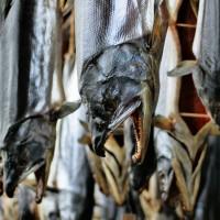 村上の塩引き鮭