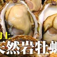 日本海の天然岩牡蠣