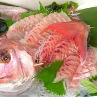 日本海の荒海で育った「天然真鯛」