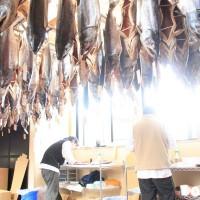 塩引き鮭製造作業風景