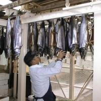 塩引鮭製造現場