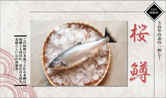 まずは本鱒(サクラマス)の白焼きや煮付けを一度お試しください。