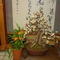 白梅(造花)