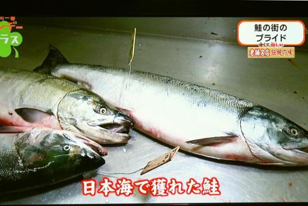 日本海でとれた鮭