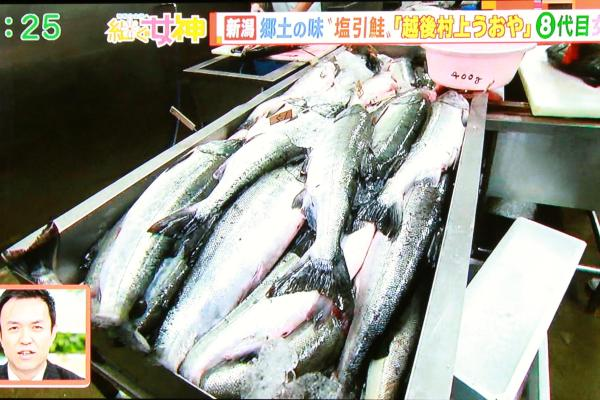 わぁ、鮭がいっぱい!わぁ~何匹いるんだろう~
