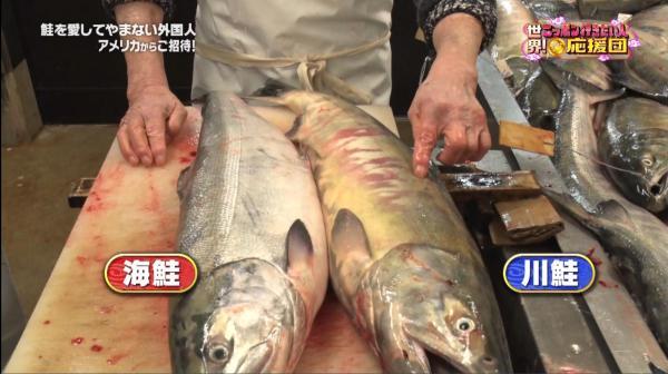 これが海鮭、これは川鮭。うちは海鮭を使っています