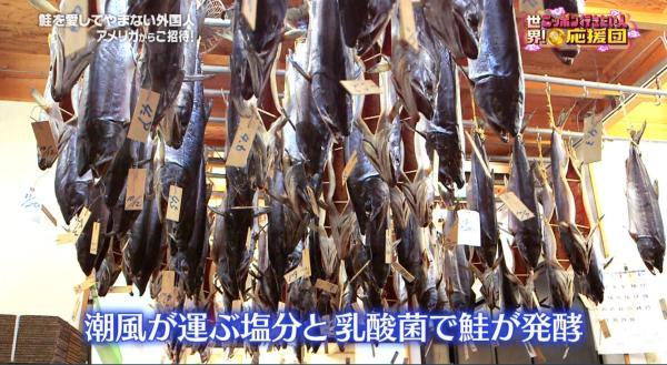 潮風によって運ばれる塩分と乳酸菌の絶妙な加減で鮭が発酵