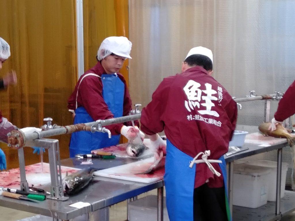 皇后ゆかりの地から思い込めて「大嘗祭」塩引き鮭 組合員9人が丹念に製造