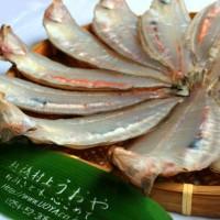新潟北部は柳鰈の水揚げが多く良質の魚場となっています
