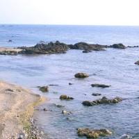 天然岩牡蠣は毎年大好評・夏のイチオシ人気商品!