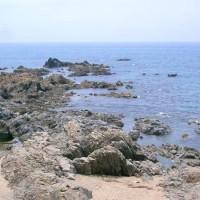 岩牡蠣のおいしさを同僚にも知らせたく岩牡蠣パーティーで楽しみました