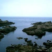 日本海天然貝セット(岩牡蠣、あわび、サザエ、煮バイ貝)