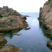 初夏の風と共に天然岩牡蠣、あわび、さざえの季節到来!