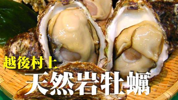 岩牡蠣(岩カキ)