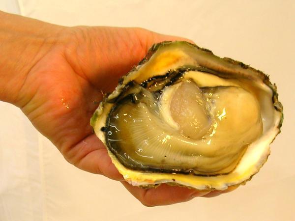 笹川流れの天然岩牡蠣