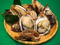 天然岩牡蠣、あわび、さざえ