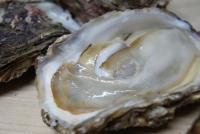 大感動 天然岩牡蠣