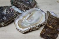 初モノ 岩牡蠣