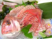 天然真鯛刺身
